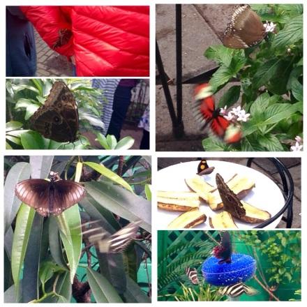 ButterflyTrip2