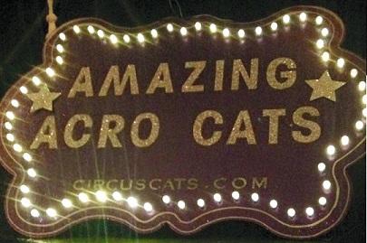 Acro-Cats 2015