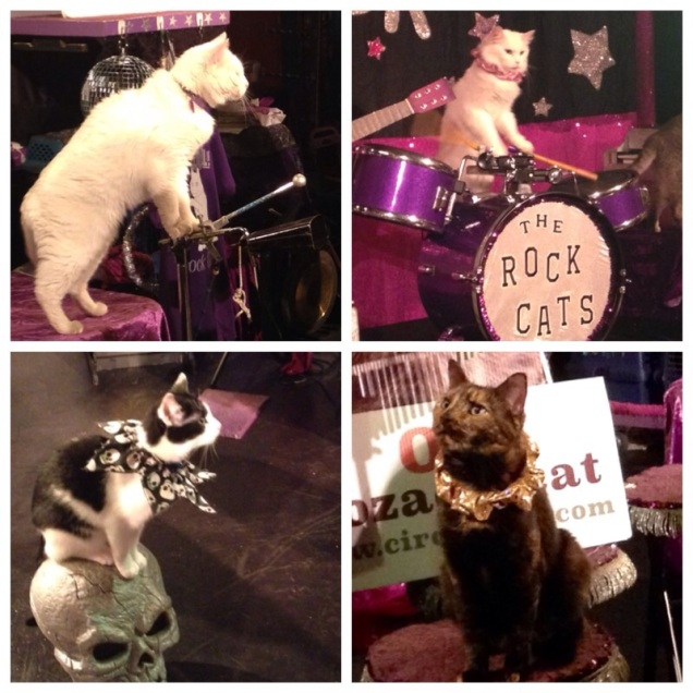 Acro-Cats Collage
